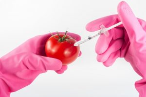 A pink gloved hand holds a tomato. Another pink gloved hand uses a syringe to inject genes into a tomato. The tomato is now genetically modified.