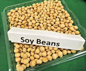 "Tan soy beans in a clear container. A sign that says ""soy beans"" is on top of the beans. Soy is the most heavily genetically modified food. And unfortunately, soy lecithin is common in candy."