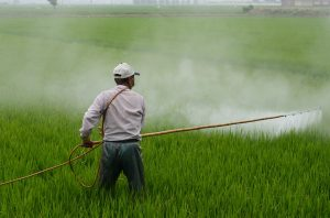 a person sprays pesticides on crops