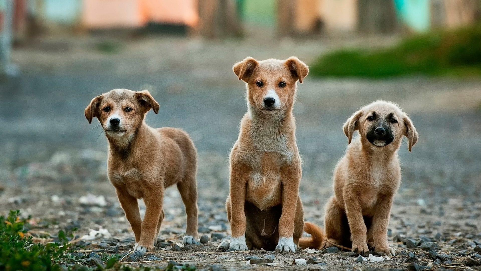 Dropshipping Dog Chews: Organic Pet Chews Opportunities