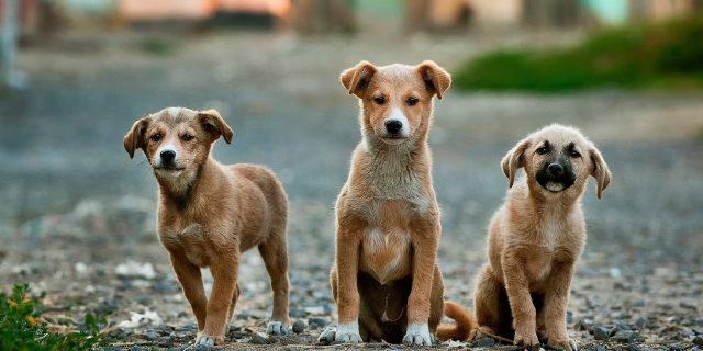 wholesale dog chews