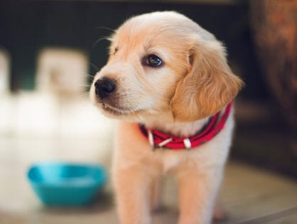 Wholesale Dog Food: Unique Products to Feed Your Pet Right