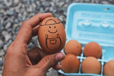 Wholesale eggs: A Food Solution Resellers Should Seriously Reconsider
