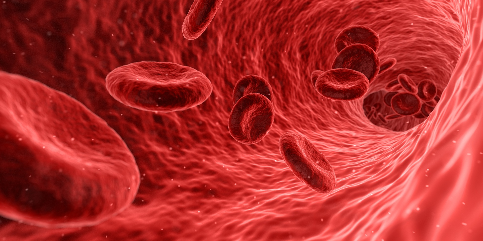 Vitamin B12 stimulates red blood cell production