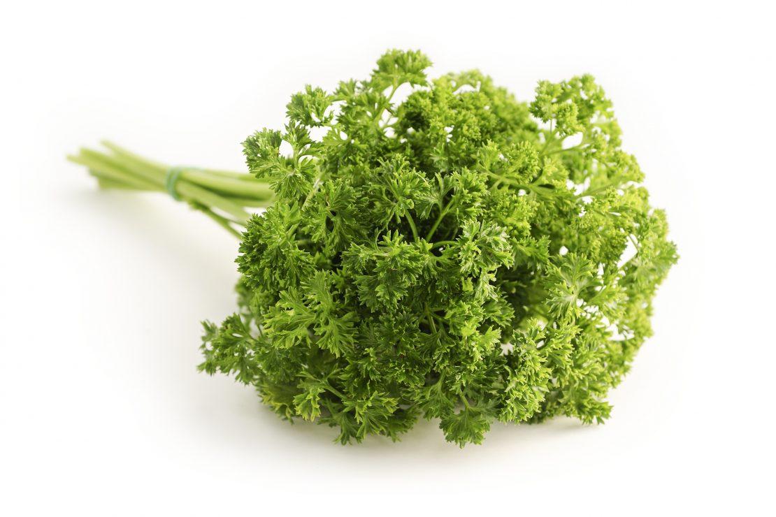 Bundle of fresh parsley leaves